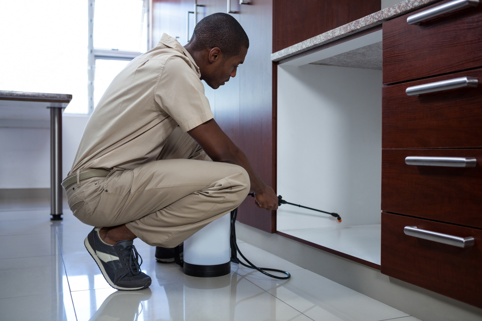 Home Pest Control, Pest Control in Camberwell, SE5. Call Now 020 8166 9746