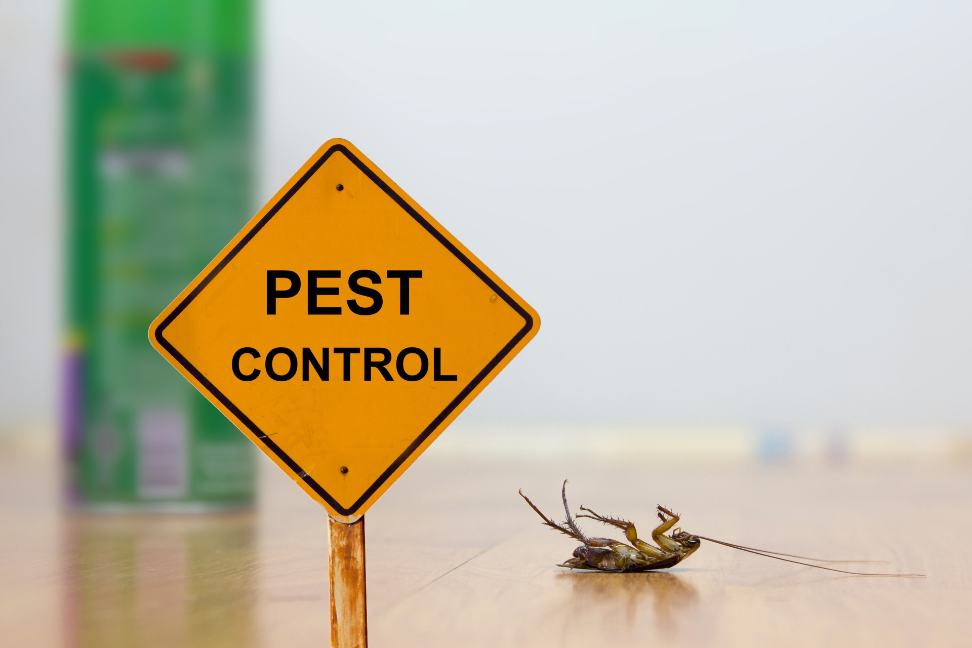 24 Hour Pest Control, Pest Control in Camberwell, SE5. Call Now 020 8166 9746